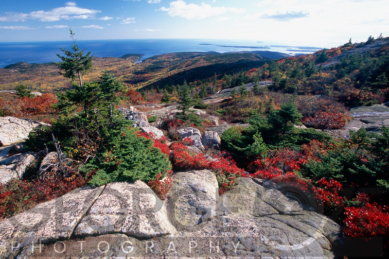 Aerial View from the Cadillac Mountain withRed Berry Bushes, Acadia National Park, Maine