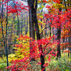 Colorful Autumn Tree Leaves in Jockey Hollow Park, New Jersey