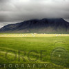 Green Pastures of Iceland