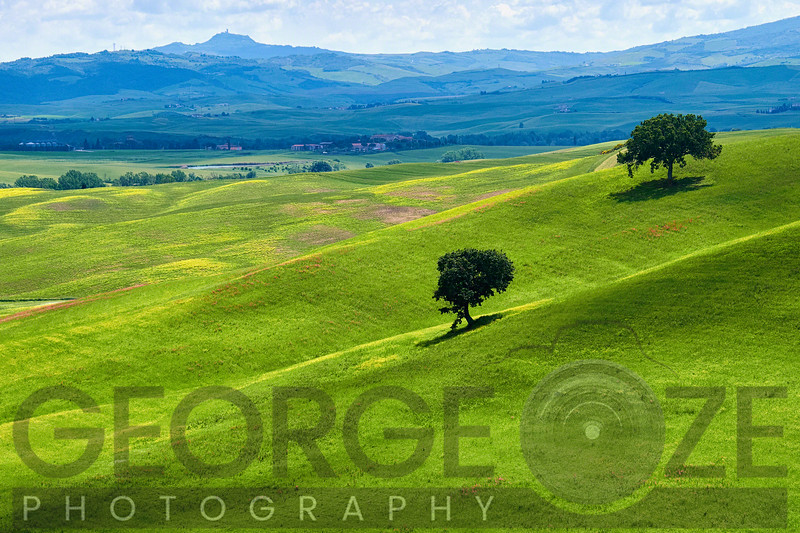 Verdant Knolls of the Tuscan Countryside, Italy