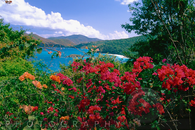View of Tropical Flowers, Trunk Bay, St John, US Virgin Islands