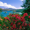 View of Tropical Flowers, Trunk Bay, St John, US Virgin Islands