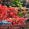 Red Bush Along a Lake in Autumn