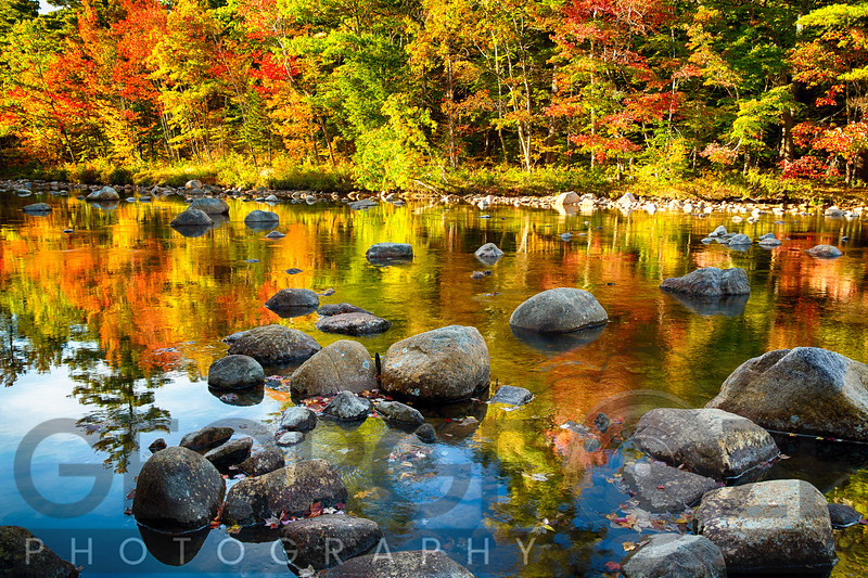 Reflections of Autumn Foliage in a River