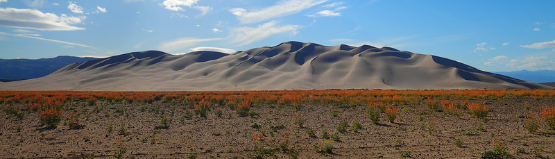 Rare Eureka Dune Evening Primrose Bordering Eureka Dunes