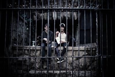 Cage Around the Monkeys