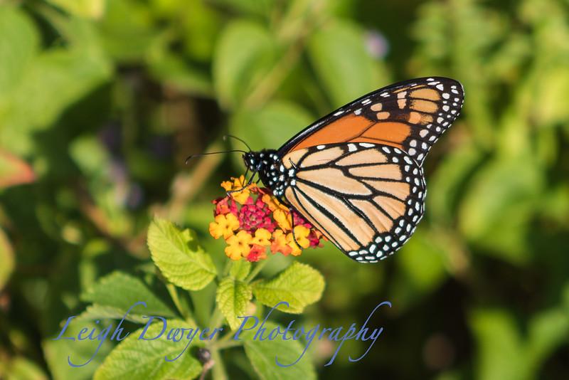 WB_Butterflies-2943-2