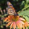 WB_Butterflies-3084
