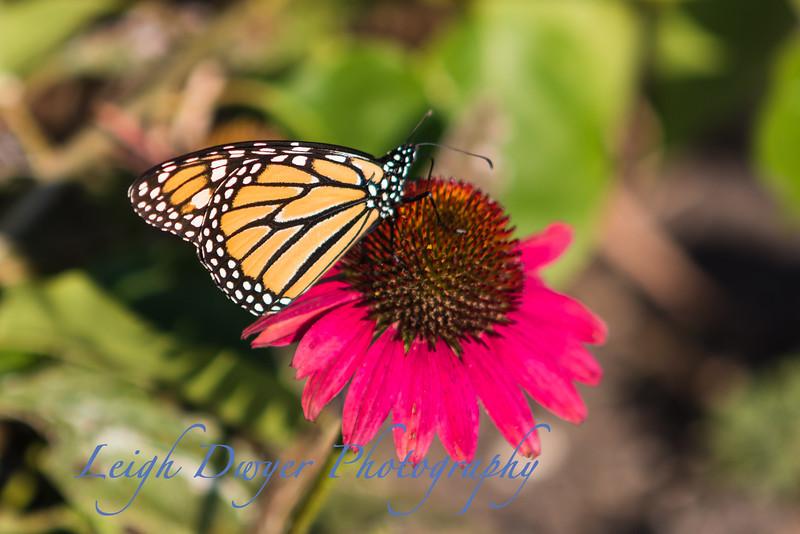 WB_Butterflies-3014-2