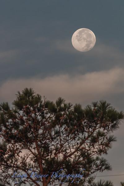 Full_Moon-9408
