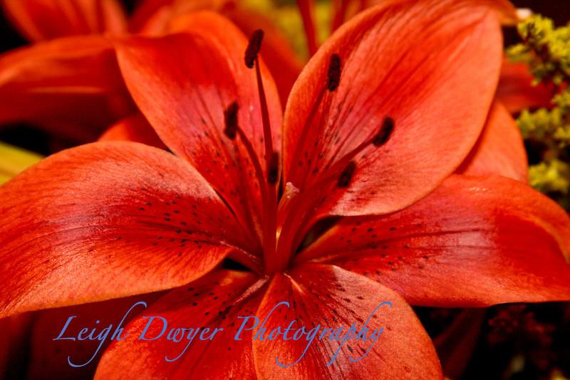 Florals 2008_1010