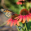 WB_Butterflies-3045