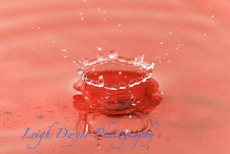 Water_Drops-6524