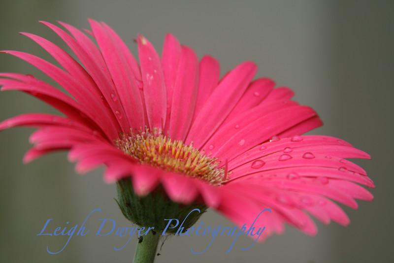 Florals 2009_6909