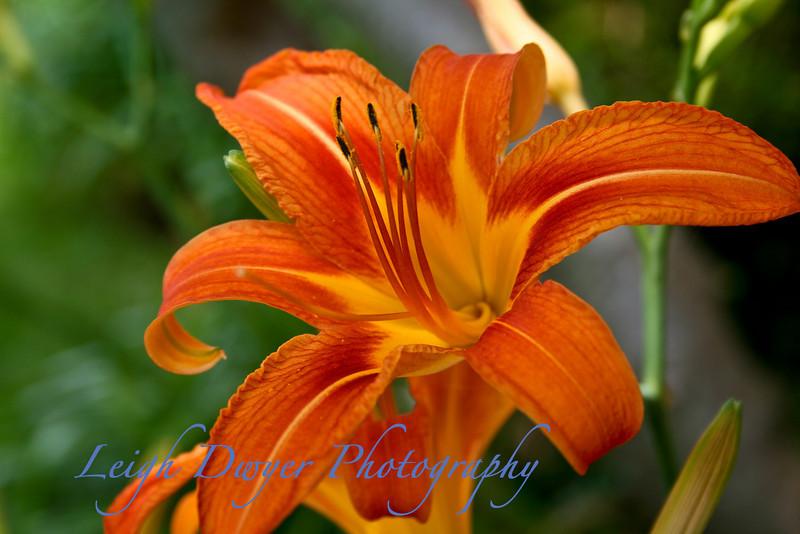Florals 2008_0870