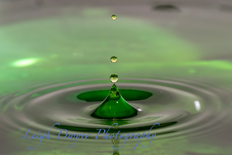 Water_Drops-5539