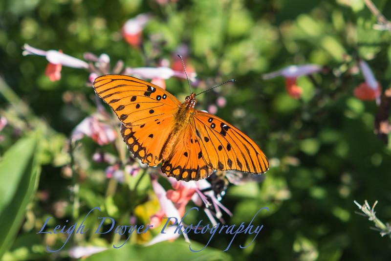 WB_Butterflies-3189