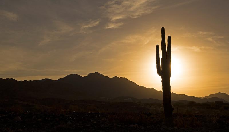 Sunrise over the Gila Mountains with Saguaro Cactus shadow