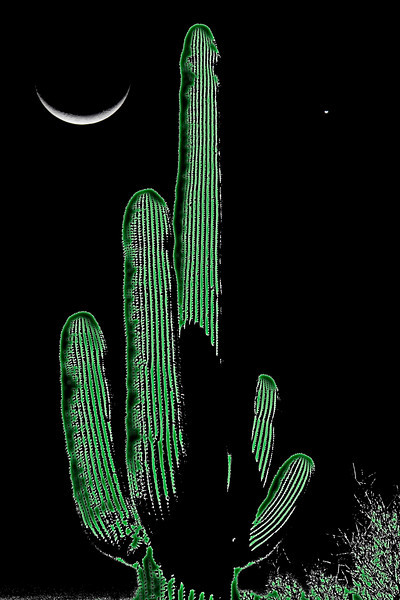 Surealistic view of Saguara Cactus and cresent moon with Venus near Pipe Organ Cactus National Park, Feb 26, 2009