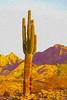 Watercolored Saguaro Cactus