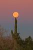 Full moon setting over Arizona Desert.