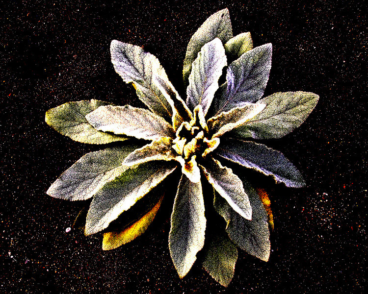 Weed growing in sand along Cowlitz River in Randle, WA. Oct 2009  (enhanced by Photoshop)