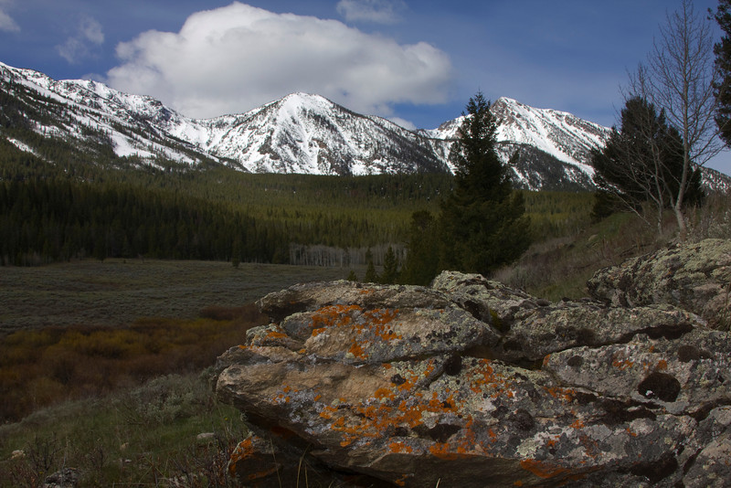 Lichen on rock with Nemesis Mountain (Montana) in the background. May 31, 2010