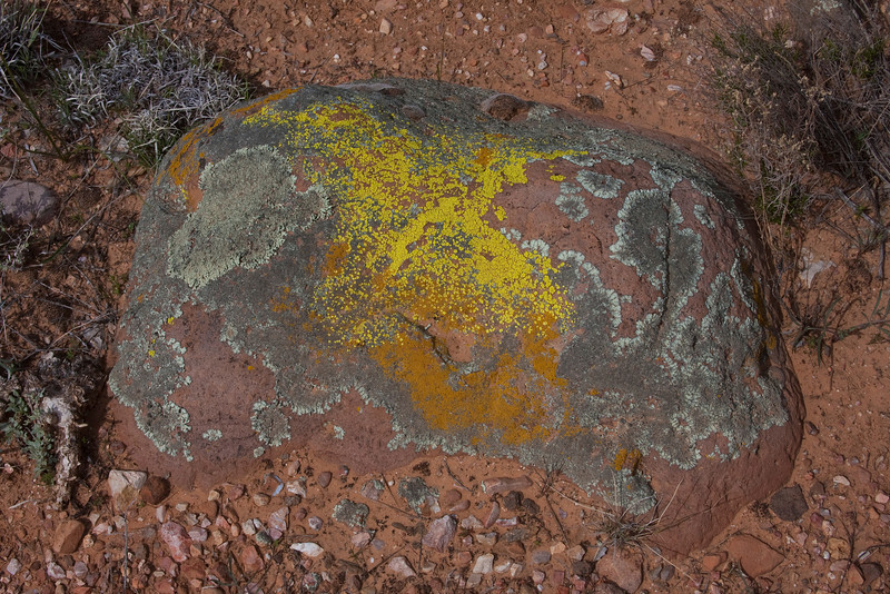 Beautiful red rock with yellow, green and orange colored lichen in the Arizona high desert near Sedona, AZ. March 2010