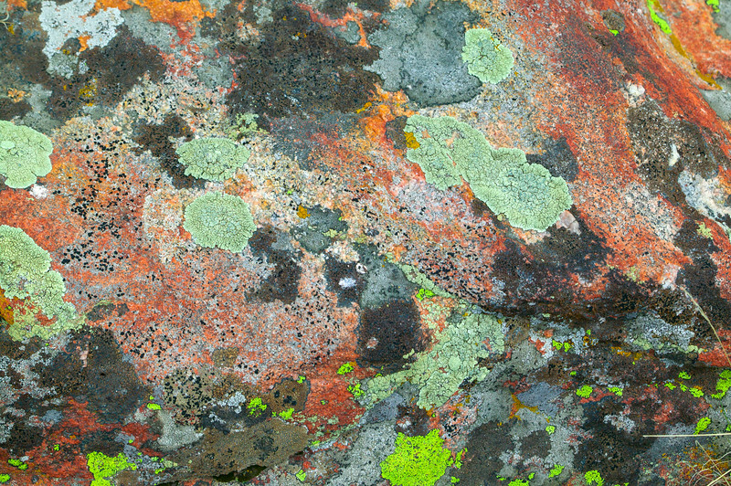 Palette of Lichen on Rock in Gravelly Range