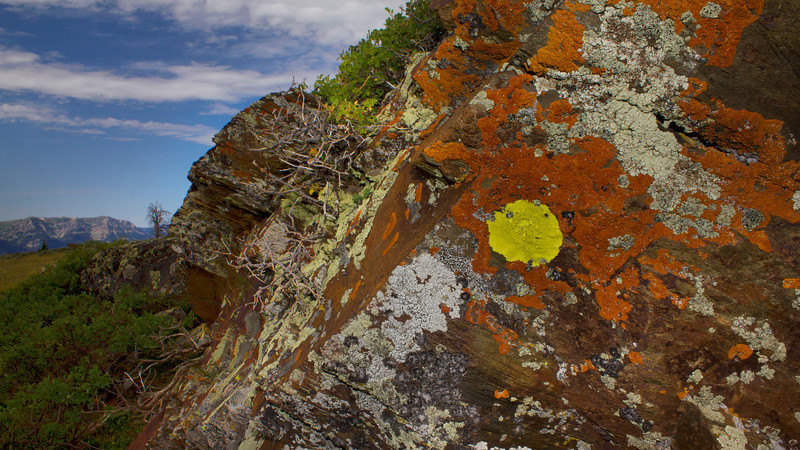 Lichen on rocks atop Deer Mountain in Montana overlooking Red Rock Lakes National Wildlife Refuge. July 2012