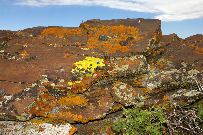 A beautiful rock is covered with various lichen on top of Deer Mountain, near Red Rock Lakes National Wildlife Refuge in Montana. July 21, 2012