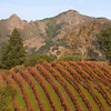 Fall colors in vineyard with peaks above the Lake Sonoma Reservoir in the background. California Dec 1, 2009