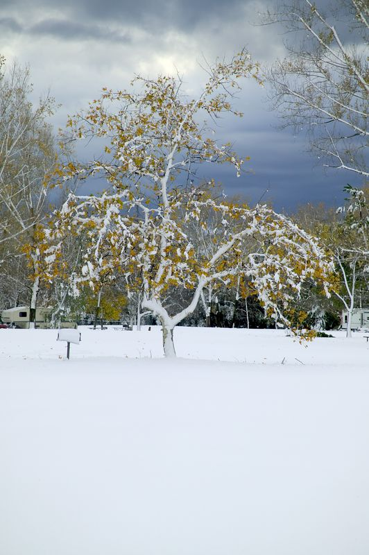 Snow in Silent Valley RV Park, near Banning, CA Thanksgiving time 2004