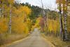 Red Rock Roasd in Fall