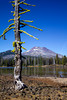 Dead tree with wolf lichen. South Sister mountain and Sparks Lake in the background. Near the Three Sisters Wilderness in central Oregon along the Cascade divide. Oct 19, 2010.