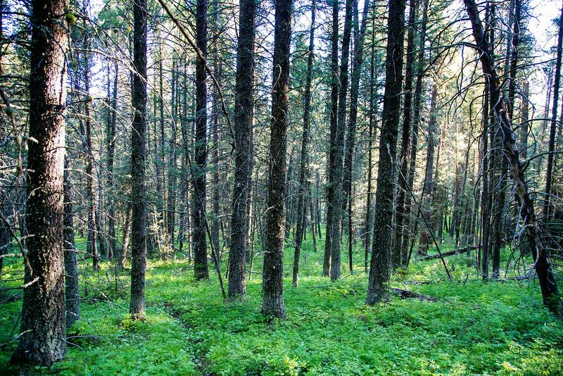 Targhee Forest in Spring