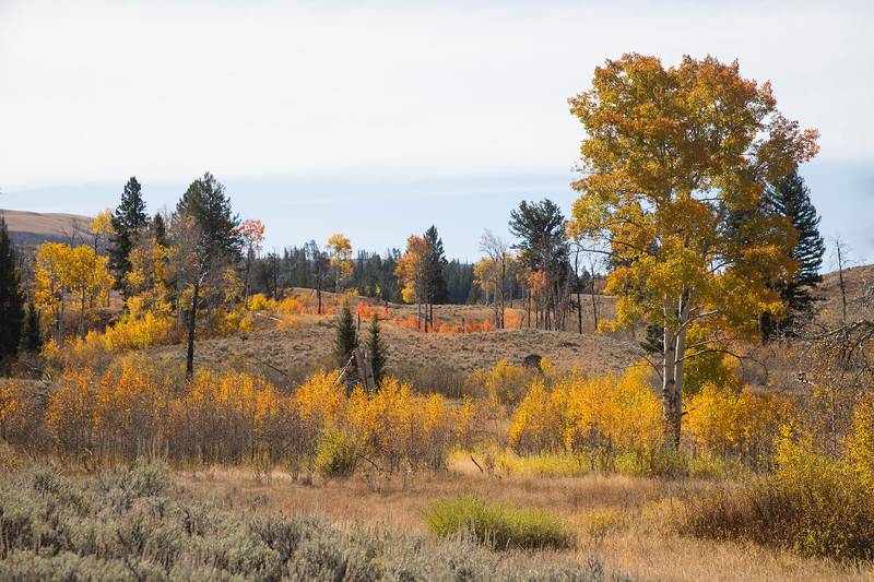 Blacktail Plateau in Yellowstone