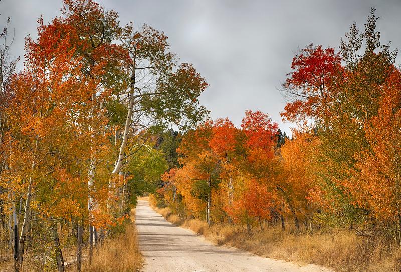 Red Rock Road, near Red Rock Pass, Idaho