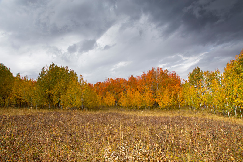 Fall Trees in Idaho
