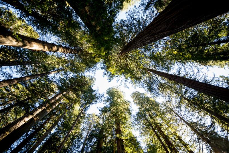 Lady Bird Johnson Redwood Grove