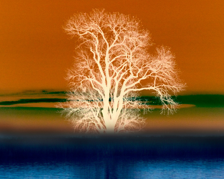 Tree near Isleton along River.. and slightly modified digitally. Might make a nice wall hanging? Dec 2009