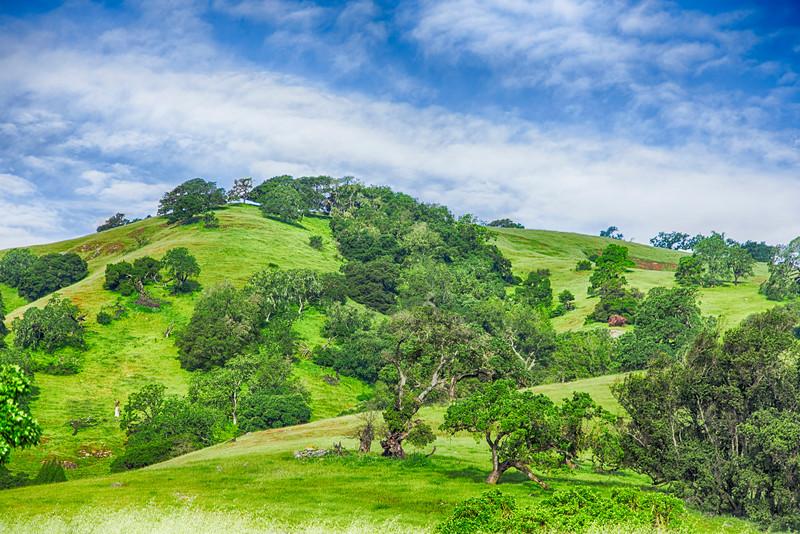 California Oak Hills