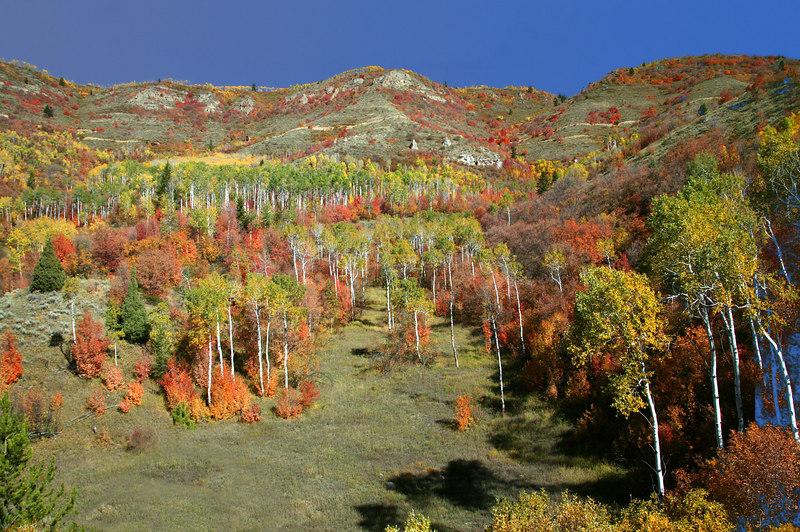 Fall colors near Idaho/Montana border.