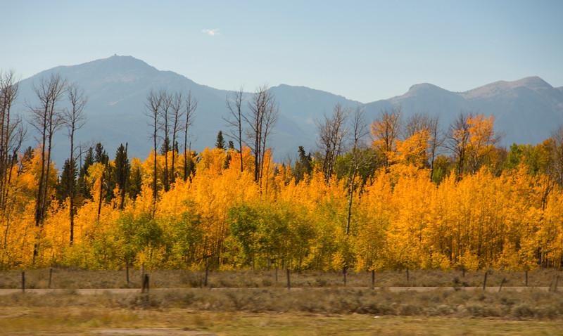Aspens and Mountains, Idaho