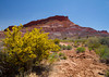 Paria Canyon, Utah and yellow bush. April 2013