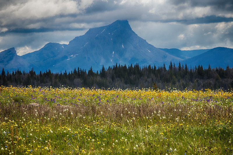 Gravelly Range wildflowers and The Sphinx Mountain