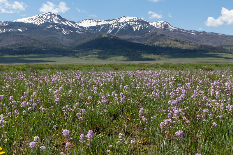 Wildflowers and Baldy Mountain RRLNWR