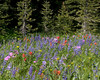 Bouquets of Lupine, Sticky Geranimum, Indian Paintbrush and more along Sawtelle Peak road near Island Park, Idaho. July 2009