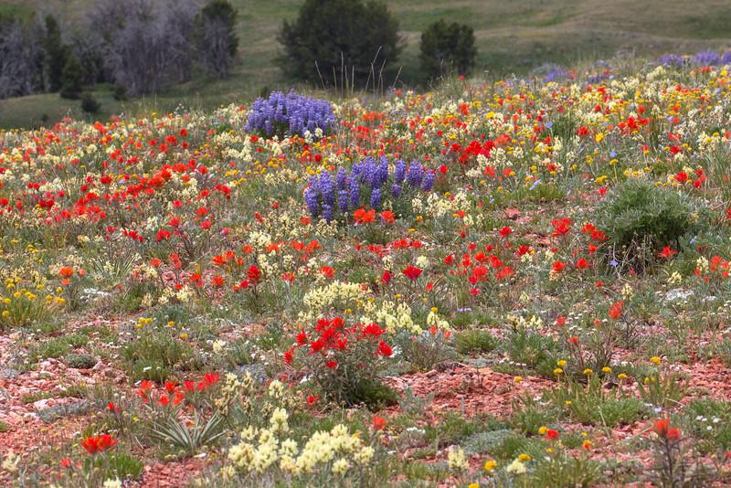 Gravelly Range Road Wildflowers