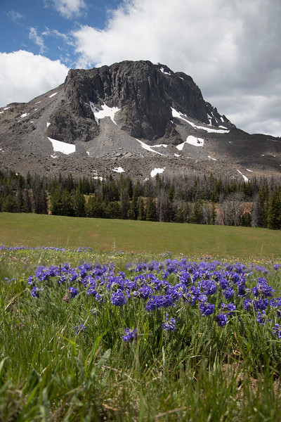 Black Butte and Sky Pilot Wildflowers